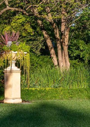 Urn with annuals on small stone pillar along a boxwood hedge.