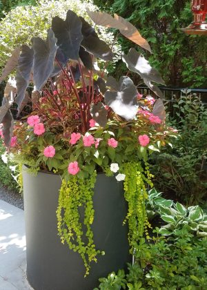 Tall dark metal modern urn with large tropical leafy annuals.
