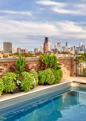 Rooftop pool with summer annual containers looking at the Chicago skyline.