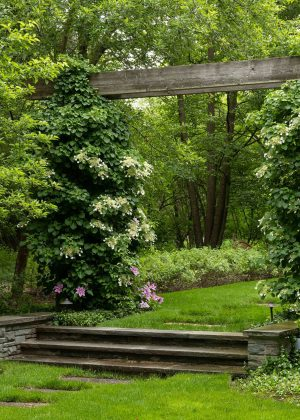 Woodland garden entrance through a heavy beam pergola with stone steps, walls and climbing vines.