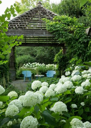 Wood pergola with a peaked roof set within a garden of hydrangea.