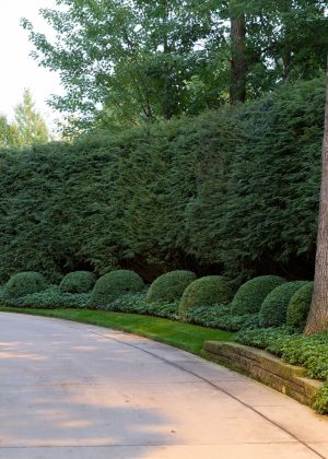 The hemlock hedge and boxwood clouds unifies the entrance of this concrete driveway.