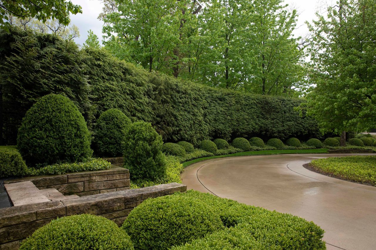 Concrete driveway lined with perfectly manicured boxwoods and an arborvitae hedge.