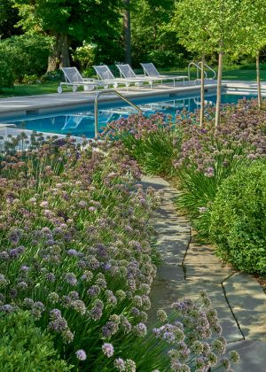Chicagoland poolside deck with perennial garden with soft purple allium flowers