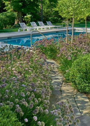 Waves allium and boxwoods connecting to pool by paver path