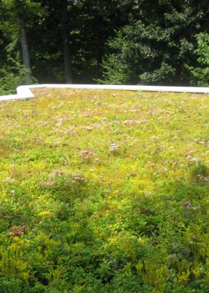 Bright sedum and flowering perennial green roof on a house with trees in the background.