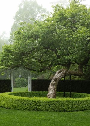 Unique slanted tree punctuated by the form of the planting