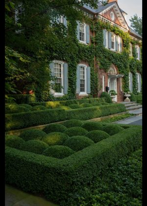 Front entry boxwood hedges. Boxwood shaped as clouds