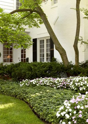 Byron_S_01_groundcover_bed_with_annual_planting_01.jpg