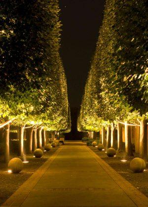Linden tree alee at night with uplighting at Chicago Botanic Garden