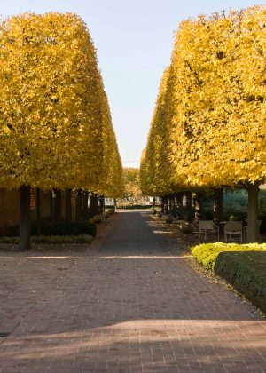 Linden tree alee and outdoor cafe during fall at Chicago Botanic Garden