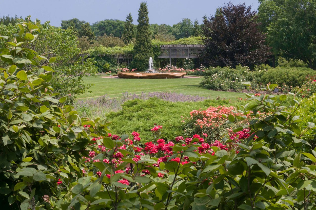 Rose-shaped fountain surrounded by varieties of roses and a wooden pergola at Rose Garden at Chicago Botanic Garden