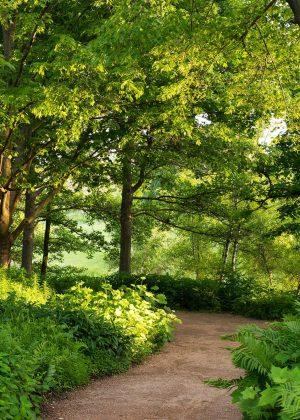 Path through forest greens in Sensory Garden at Chicago Botanic Garden