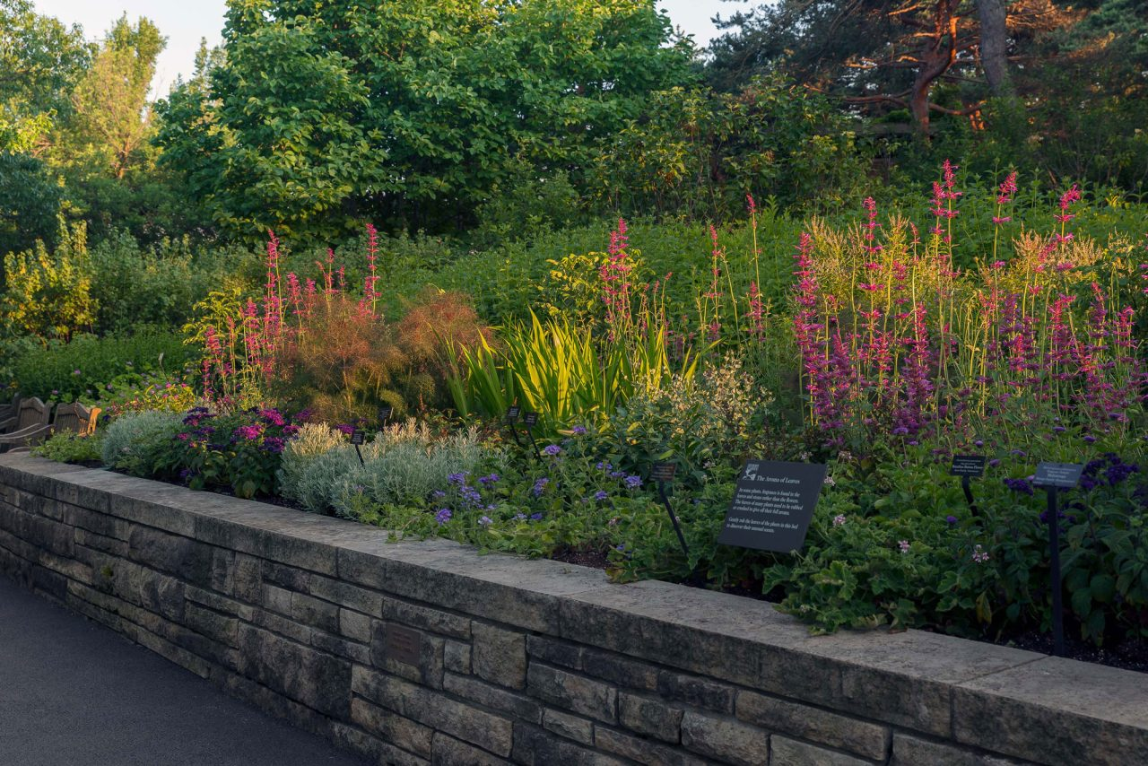 Stone flower bed with fragrant annuals and perennials in Sensory Garden at Chicago Botanic Garden