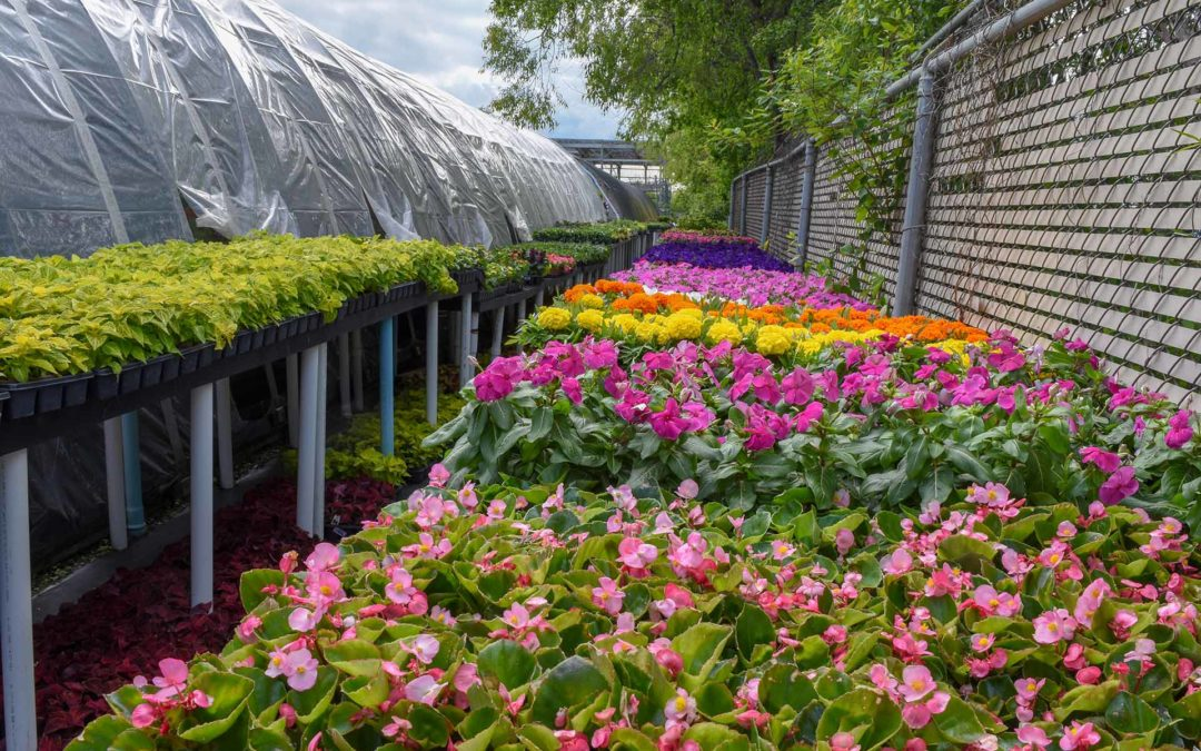 SPLASHES OF COLOR WITH SUMMER FLOWERS