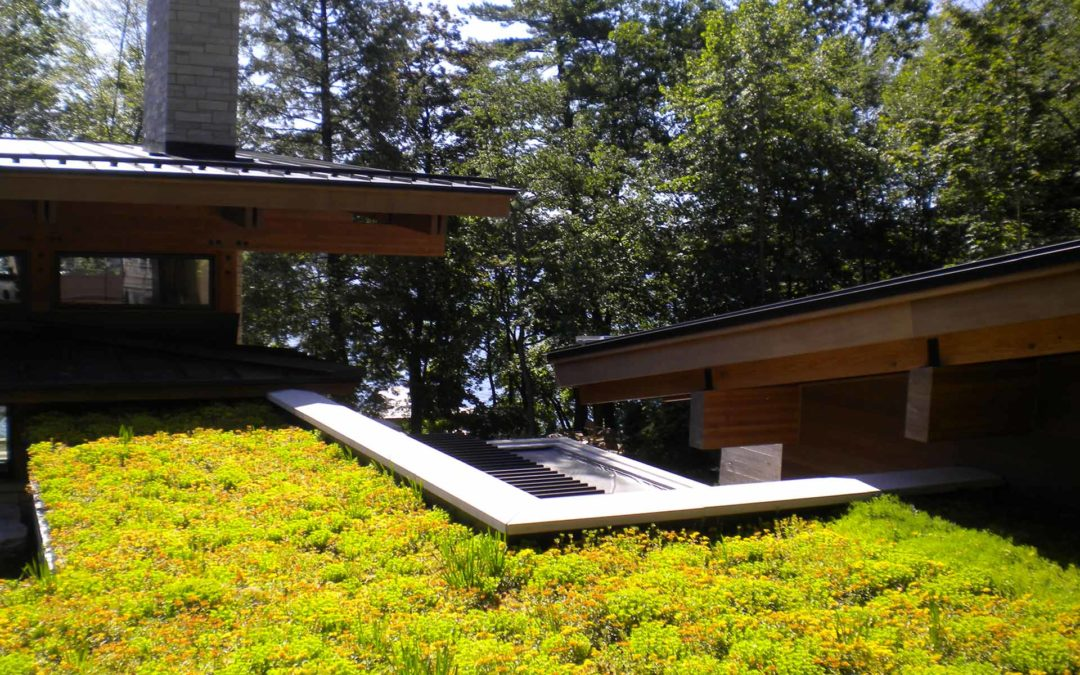 GROWING TALL WITH GREEN ROOFS